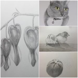 various pencil drawings by Karen James